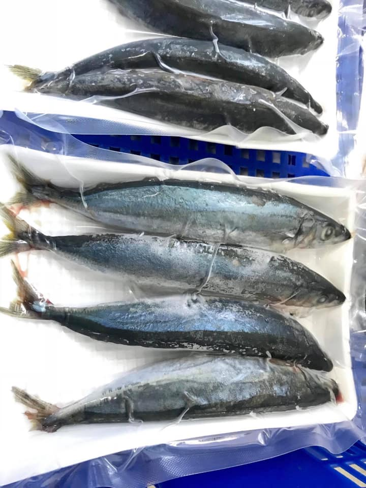 Cá Nục Thuôn tươi Phú Quý loại 1